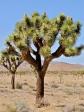 Joshua Tree National Park ~ CA